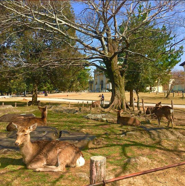 Best places to visit in Nara Japan
