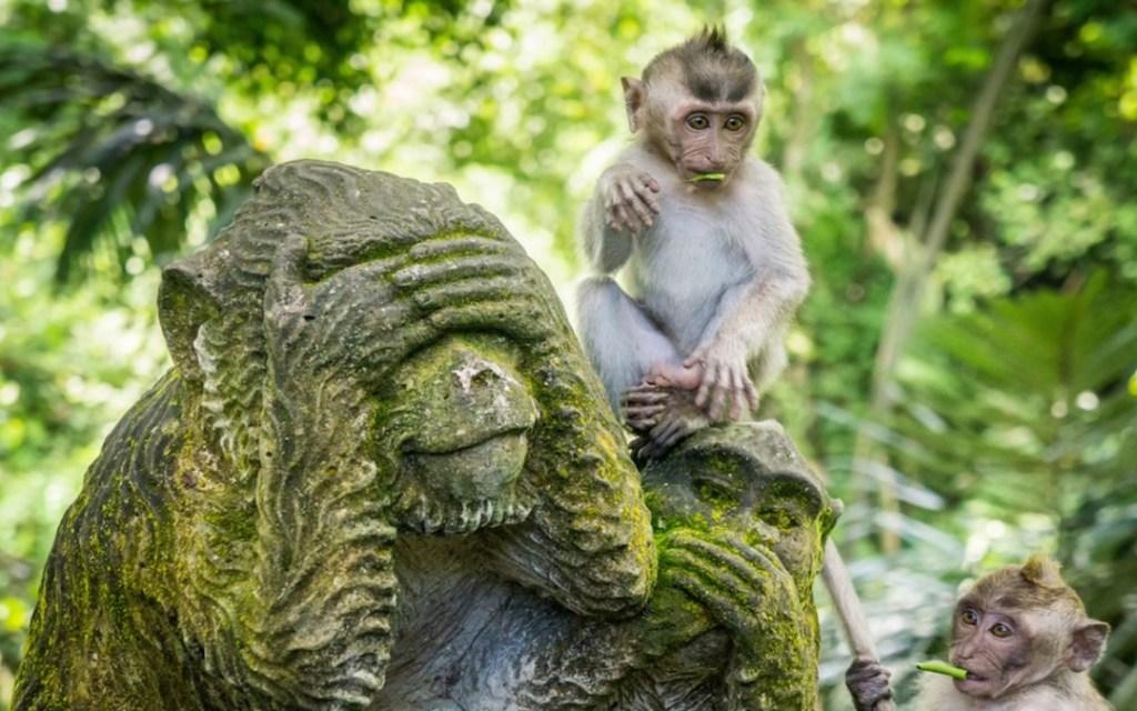 Bali Indonesia Monkey Forest