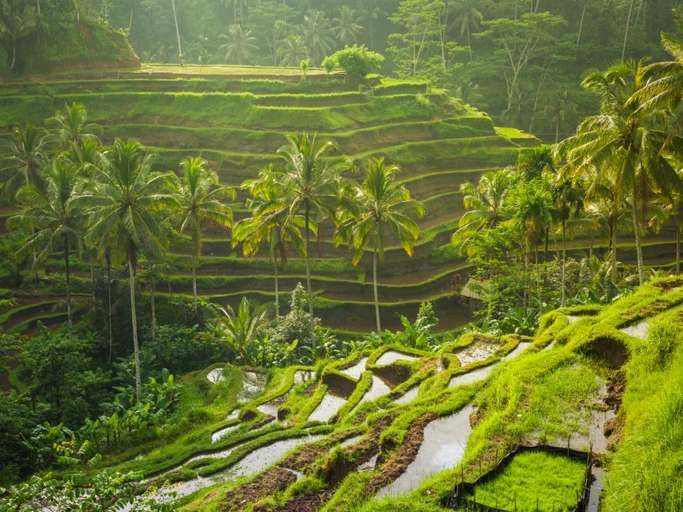 Bali Indonesia Tegalalang Rice Terraces