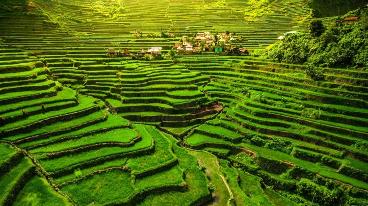 The Banaue Rice Terraces Best Places to Visit in the Philippines