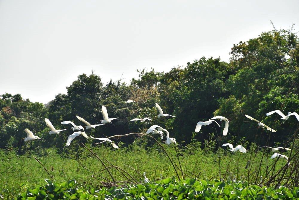 Bird watching Prek Toal Bird Sanctuary Siem Reap Cambodia