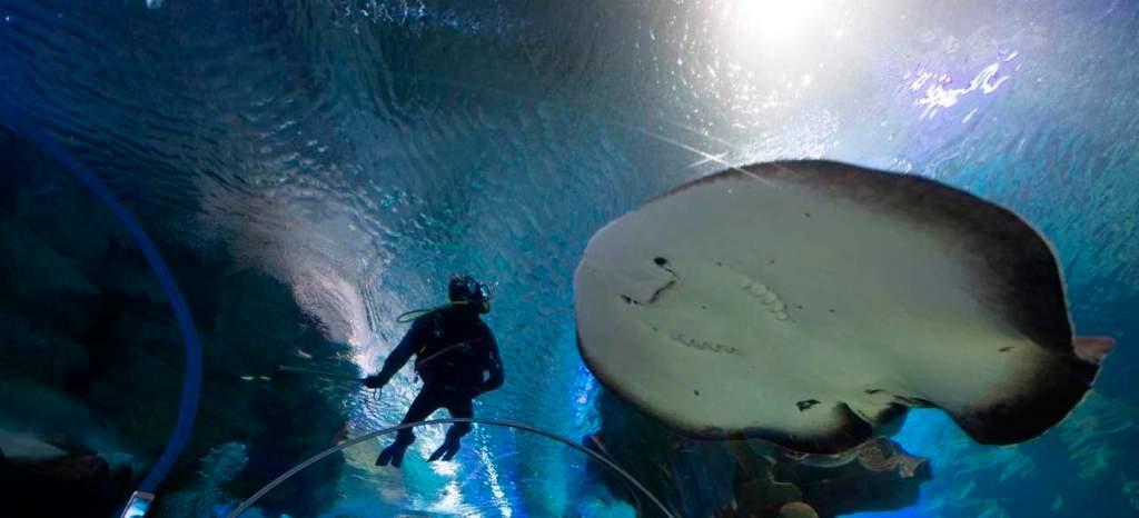 Aquaria KLCC Top 10 Places to Visit in Kuala Lumpur