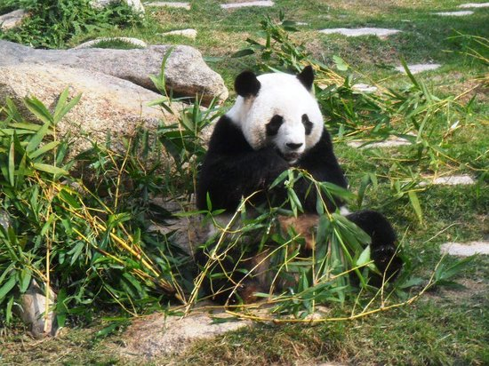 Macau Giant Panda Pavilion Top 10 Places to Visit in Macau